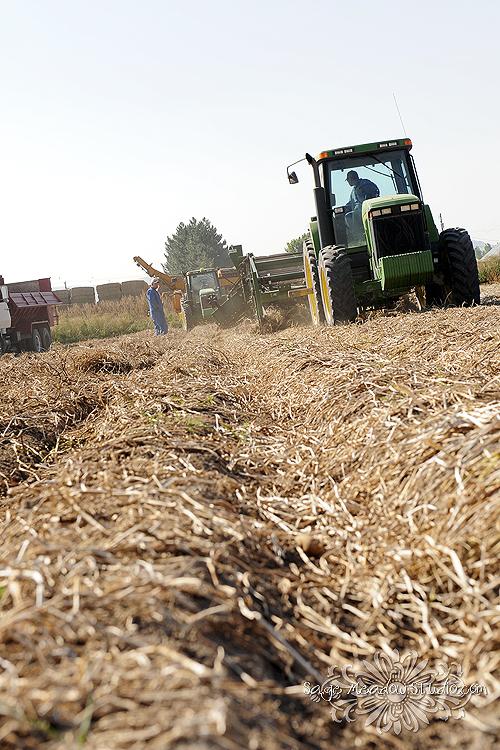 Harvest1021 web