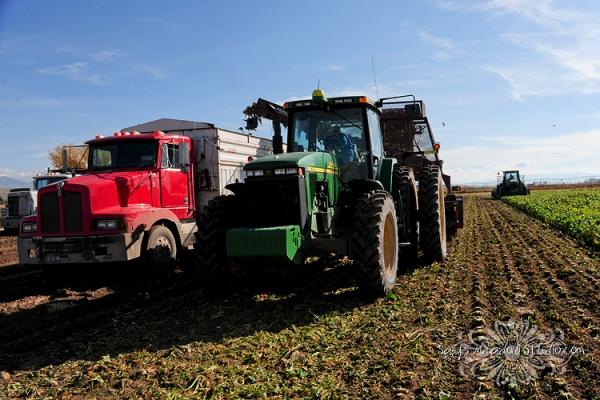 Harvest2217 web