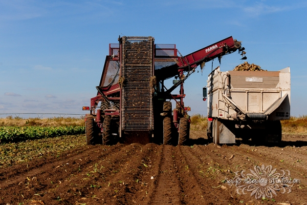 Harvest2226 web